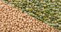 Pois chiches et lentilles : un bilan de campagne nuancé. Photo : Rytis/Philipp Berezknoy/AdobeStock